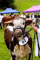 Dunster Show August 18th 2017